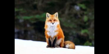 提高毛皮动物繁殖性能的综合措施